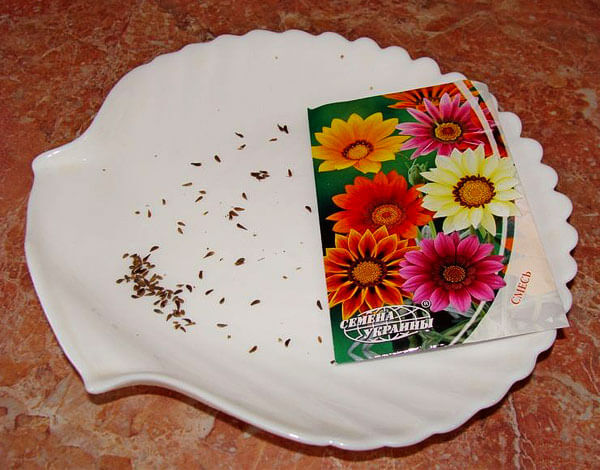 Семена газании похожи внешне на семена остеоспермума и имеют такую же вытянутую форму.