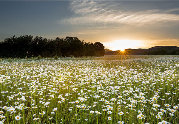 Такое поле красиво само по себе, а во сне ещё и сулит много хорошего.