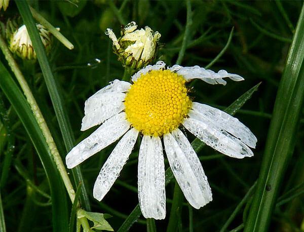 Чем неряшливее цветок, тем большее количество неприятностей он сулит.