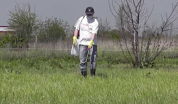 Точечное нанесение гербицида менее вредно для участка, чем сплошное.
