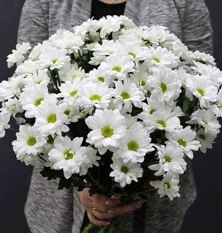 Удивительно, но эти цветы тоже нередко называют ромашками.