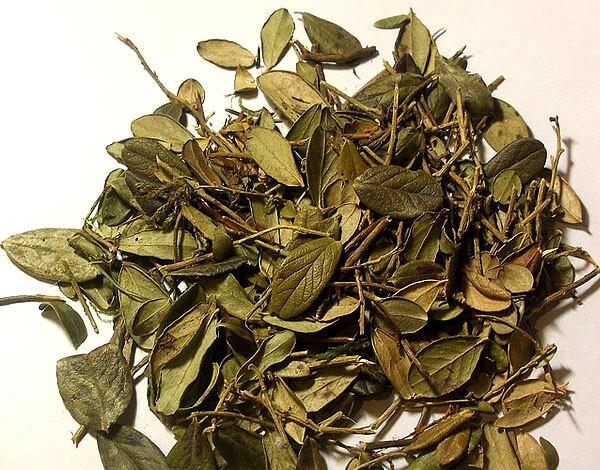 К тому же, в высушенных листьях не содержатся различные загрязнения и насекомые.