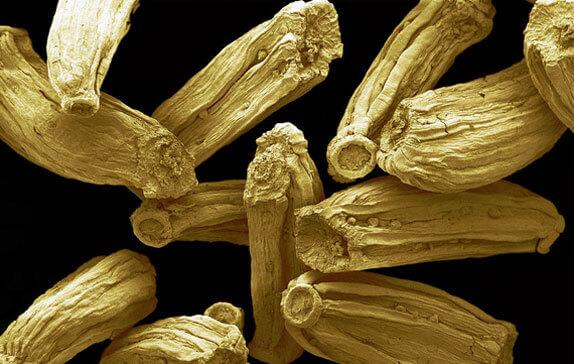 Такие же семена у других видов рода Matricaria, в том числе у лепидотеки пахучей.