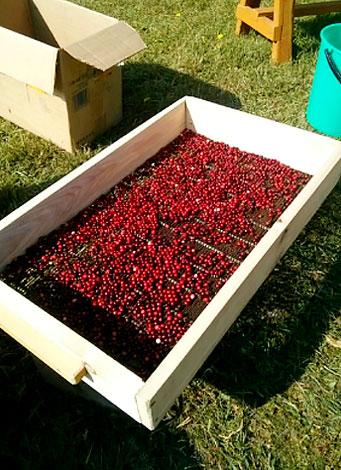 Такая установка позволяет наиболее быстро очистить ягоды от мусора.