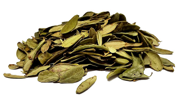 Поэтому в лечебных целях применяют именно брусничный лист.