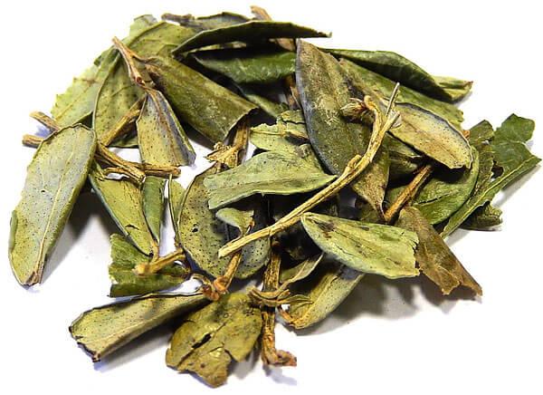 Масса листьев после сушки в 5 раз меньше, чем у свежих.