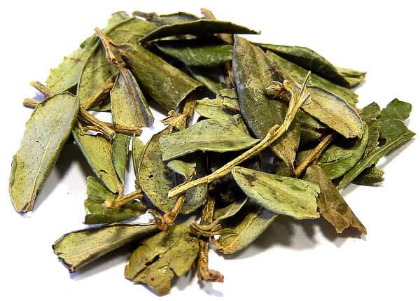 По количество арбутина в листьях брусника конкурирует с толокнянкой.