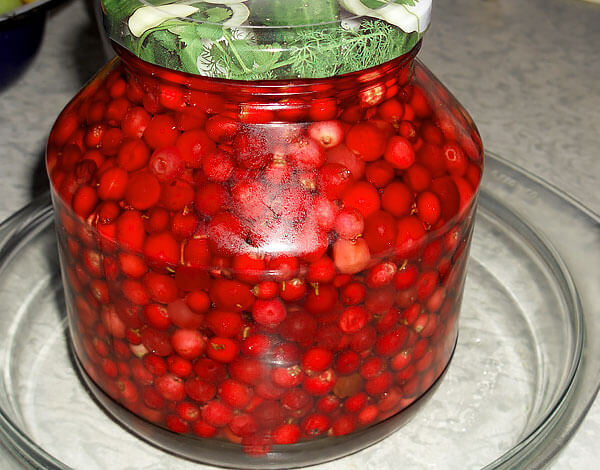 За счет большого количества кислот ягоды не повреждаются бактериями и достаточно долго хранятся.