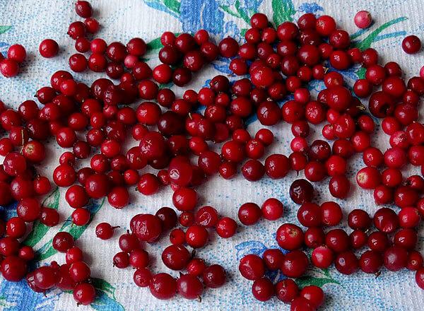 После размораживания влажных ягод выделяется большое количество воды, что может повлиять на вкус блюд или свойства лекарственных средств.