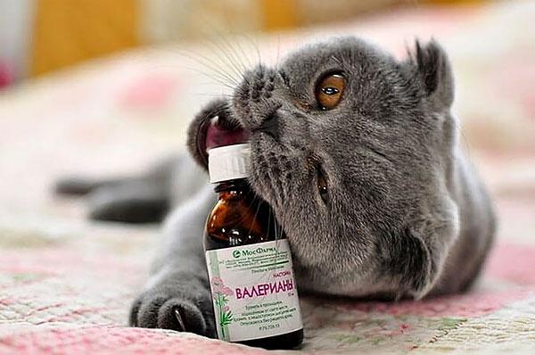 Любые препараты валерианы должны храниться в недоступном для животных месте.