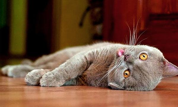 """Вблизи валерианы коты """"сходят с ума"""" обычно минут 20-30, после чего в изнеможении отдыхают."""