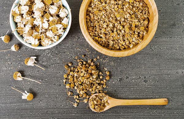 Для приготовления средств соцветия ромашки высушивают, чтобы повысить в них концентрацию лечебных компонентов.