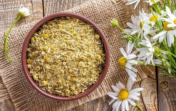 При отсутствии аллергии препараты ромашки аптечной для наружного применения совершенно безопасны и могут применяться постоянно.