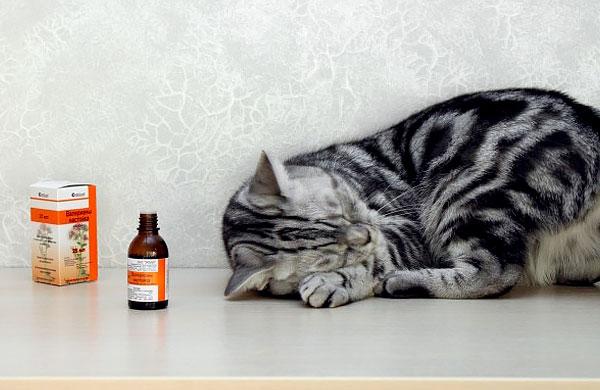В общем и целом давать коту валерьянку - значит, издеваться над животным.