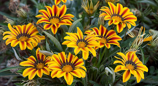 Эти растения происходят из Африки.