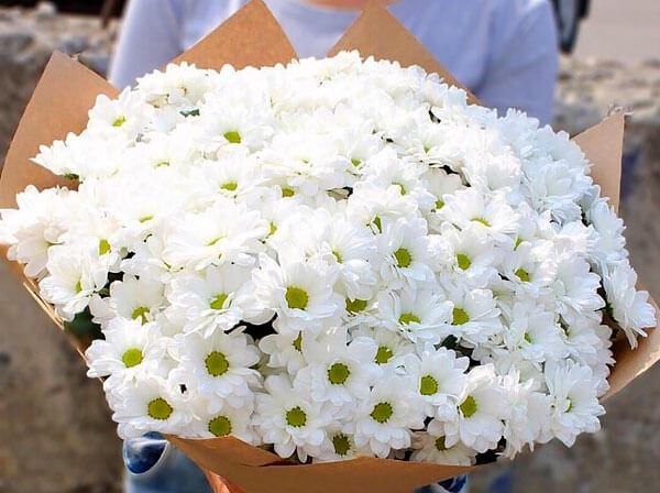 Эти цветы в магазинах часто называют большими ромашками.