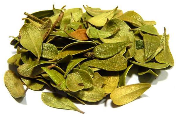 Собственно, из-за наличия листьев брусники в составе Бруснивера он также применяется только по рекомендации врача.