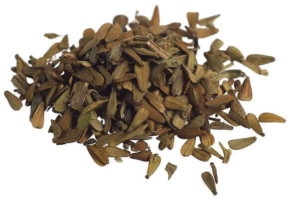 Этими семенами любят лакомиться мелкие птицы - щеглы, коноплянки, воробьи.