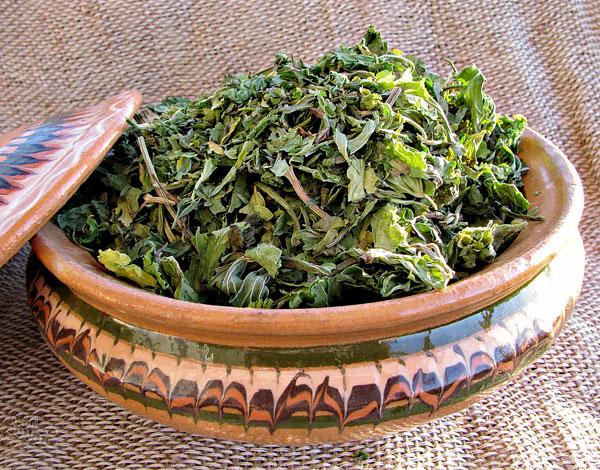 Из таких листьев готовят чай и отвар.
