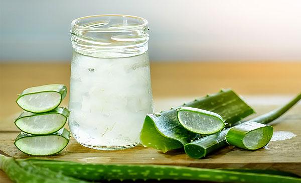 Сок, выдавленный из этих листьев, достаточно долго может храниться в холодильнике, сохраняя свои свойства.